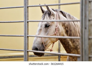 Closeup shot with the head of a white horse inside a pen