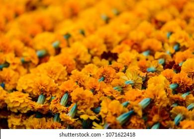 Closeup shot of marigold garlands