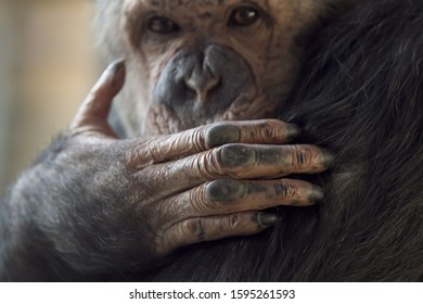 A closeup shot of a monkey's hand with its face blurred in the background