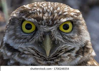 A closeup shot of an owl looking at the camera
