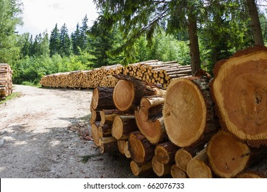 A close-up shot of a pile of logs on the background of forest