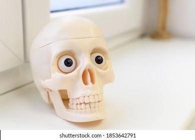 A closeup shot of a plastic skull sitting on a windowsill