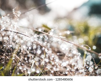 Close-up shot of small branches with fresh dew in the morning