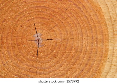 A closeup shot of tree growth rings in a pine tree