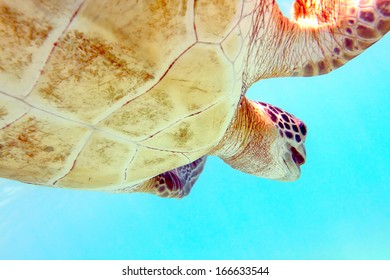 Close-up shot of a turtle under water, shallow focus