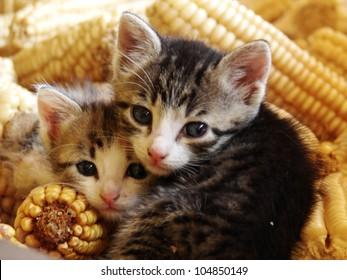 Closeup shot of two kittens cuddling together.