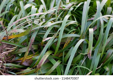 a closeup shot of waves of grass forming interesting shapes and patterns