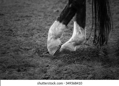 Close-up shot of white and black legs of horse standing in funny posture on ground like while dancing. Horse legs details and long tail. Monochrome dramatic shot