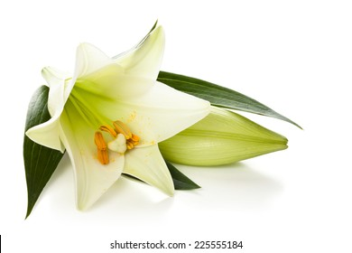 Closeup shot of white lily isolated on white background.