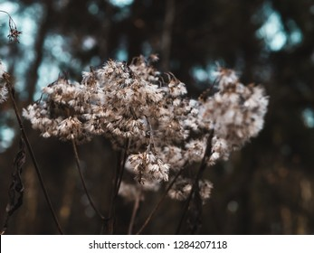 Close-up shot of a willow in bloom n the forest