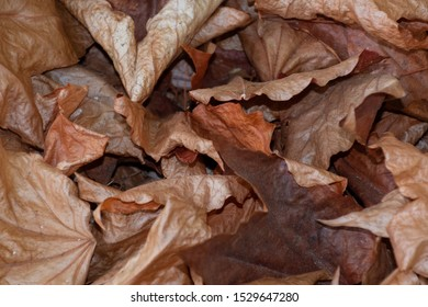 A closeup shot of withered fall leaves