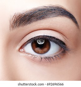 Closeup shot of woman brown eye with day makeup