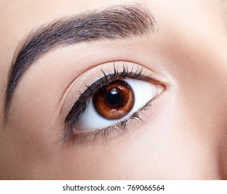 Closeup shot of woman brown eye with day makeup