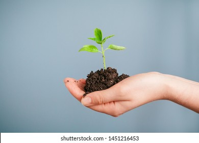 Closeup shot of a woman holding a green plant in palm of her hand. Close up