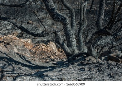A closeup shot of a wooden trunk with multiple branches in a deserted area