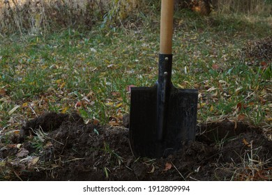 A close-up of a shovel with a wooden handle, stuck into the ground. The beginning of digging the soil.