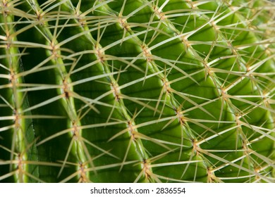 Close-up of the side of a cactus