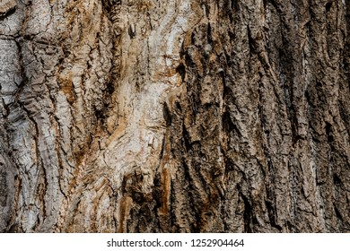 Closeup side of an large old oak tree with cracks and crevices in bark of gray and brown color.