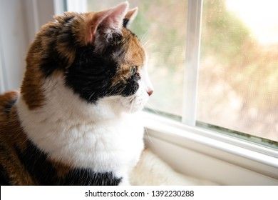 Closeup side profile of one cute calico cat lying down by windowsill indoors of house home room looking out through window