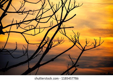 Closeup silhouette of leafless tree with beautiful sunset sky background