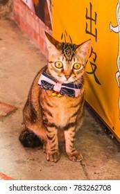 Closeup Single cute cat in front of Shop in Jiufen Village,Taiwan
