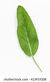 Closeup of single fresh sage leaves isolated on white background .