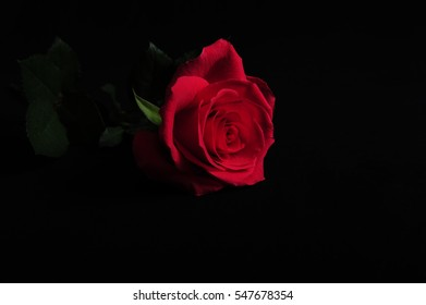 Closeup of single light red rose lying on black cloth surface. Frontal shot of dark pink rose.  Copy space in lower and right part of horizontal photo.