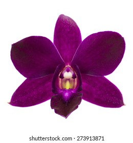 Close-up of single purple Orchid flower isolated on white background.