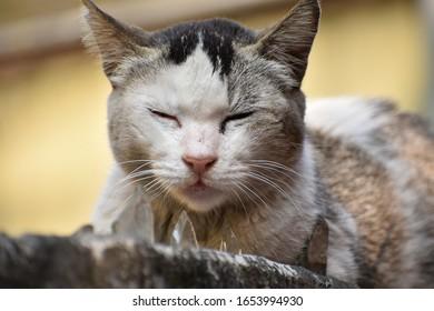 closeup of a sleepy grey cat