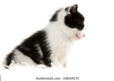 Closeup small kitten isolated on white background