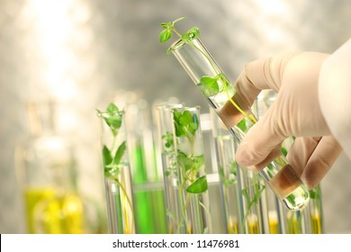 Close-up of small plants in test tubes