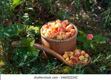 A close-up of a small round wicker basket with precious cloudberries (Rubus chamaemorus). Season: Summer. Location: Western Siberian taiga.