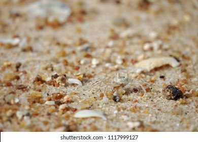 Closeup small white crab walking on the sand. The crab camouflage with sand. Copy space and blurry sand background.