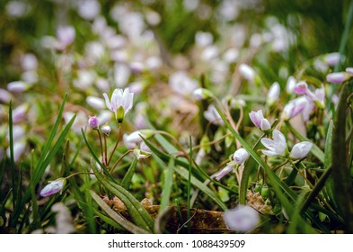 closeup of small white flowers in the meadow
