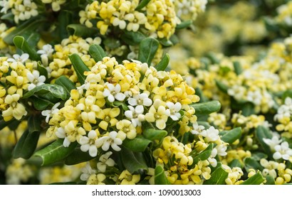 Close-up of small yellow and white flowers on a tree