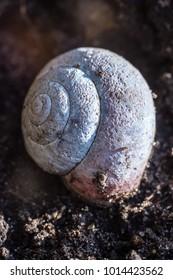 Closeup of a snail