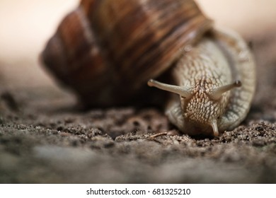 Close-up of snail in shell crawling on the ground