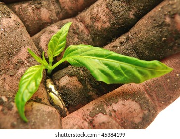 closeup of soil-caked hand holding a green sprout