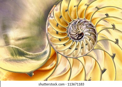 Close-up of a solarized nautilus shell revealing its intricate patterns, textures, and details