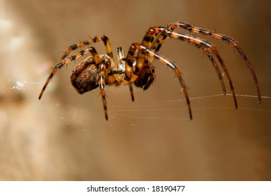 Close-up of a spider on web