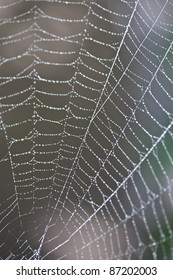 Close-up of a spider web in dew