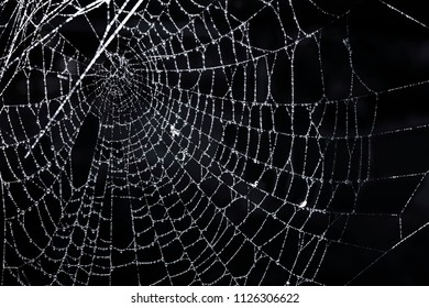 Closeup of spider web with dew against black background