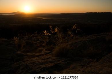 Close-up, spike at sunrise reflecting sunlight.
