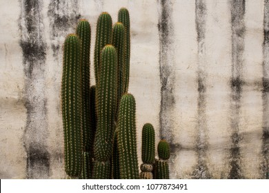 Closeup of a Spiky Green Cactus against a white stucco wall