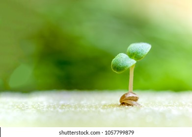 Close-up sprout of vegetables for preparing to be planted with copy space for your text, hydroponics concept.