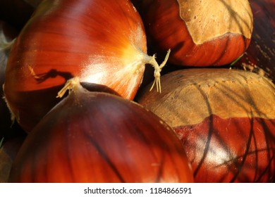 A closeup of a stack of many Spanish chestnuts (Castanea sativa), at the sunlight, in the green grass of a lawn. Hilum and tuft or flame can be seen