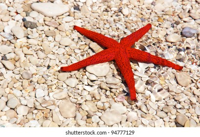 Close-up of a starfish on shingle in the water