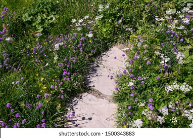 Close-up of a stone path among wild mountain flowers (Scabiosa, Achillea, Trollius) of different colors in summer, Aosta Valley, Italy