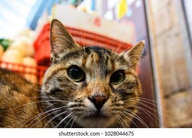 Closeup of a street cat at Mahane Yehuda Market in Jerusalem, Israel