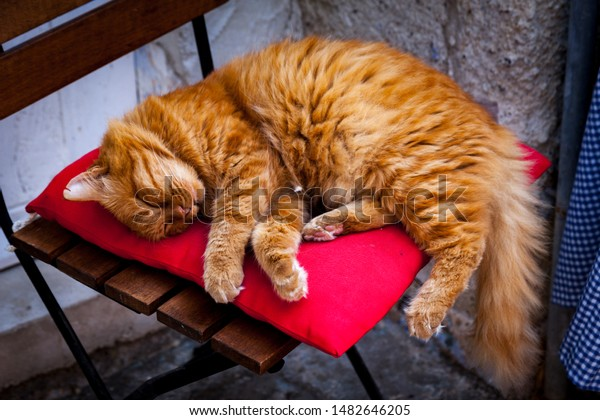 closeup-street-cat-sleeping-lying-600w-1